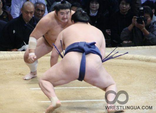 Голые сумоистки фото 44