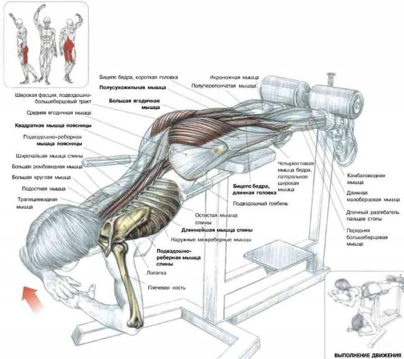 Как накачать мышцы пресса в домашних условиях быстро и 2